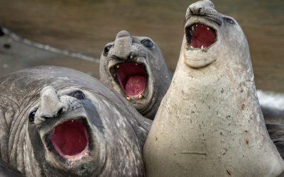 """รวมภาพถ่ายสัตว์โลกสายฮา จากการประกวด """"Comedy Wildlife Photography Awards"""""""